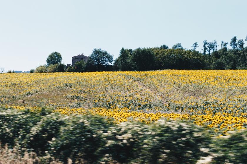 Tuscan Drive 2017-2216