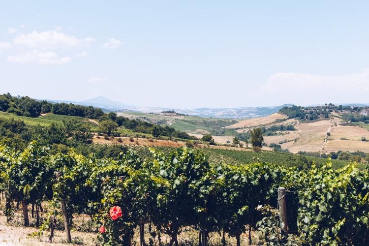 Tuscan Drive 2017-2225